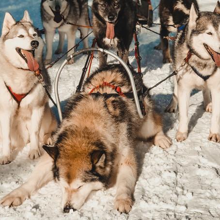 3 Europese bestemmingen voor een hondensledetocht
