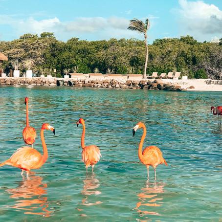7 x de leukste dingen om te doen op Aruba
