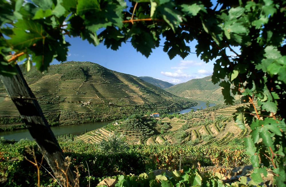 wijnregios-van-portugal