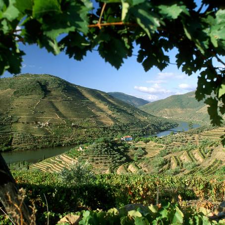 Ga mee langs de 7 wijnregio's van Portugal
