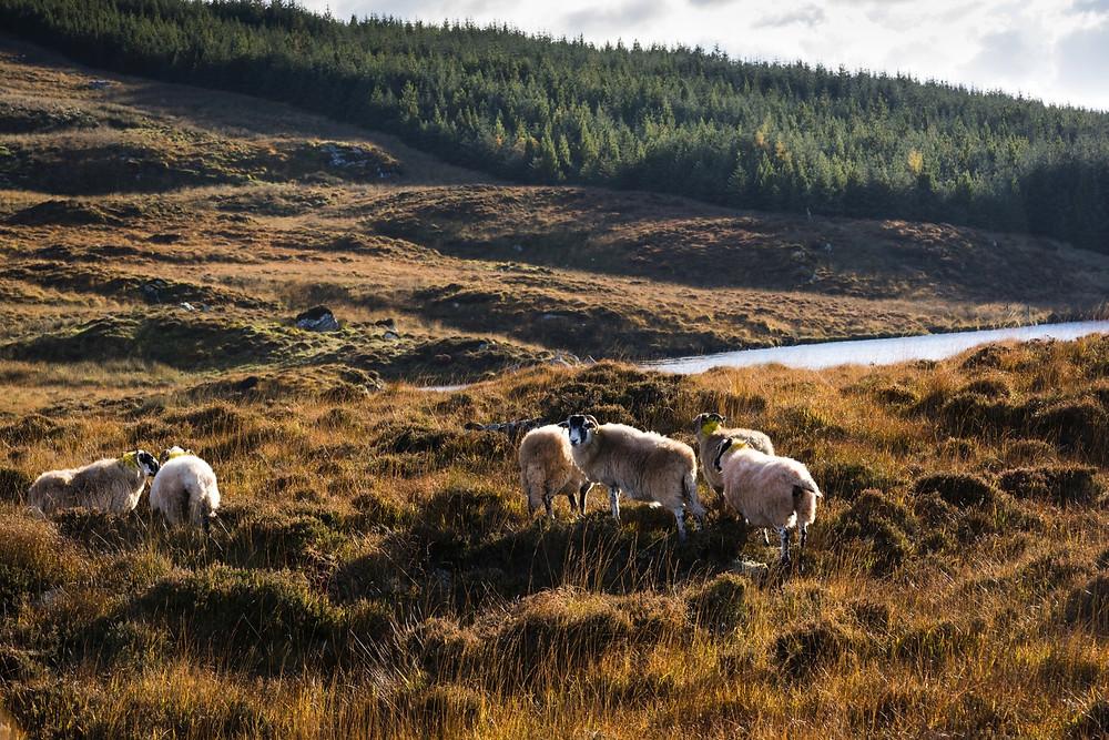 de-mooiste-Ierse-landschappen-natuurgebieden
