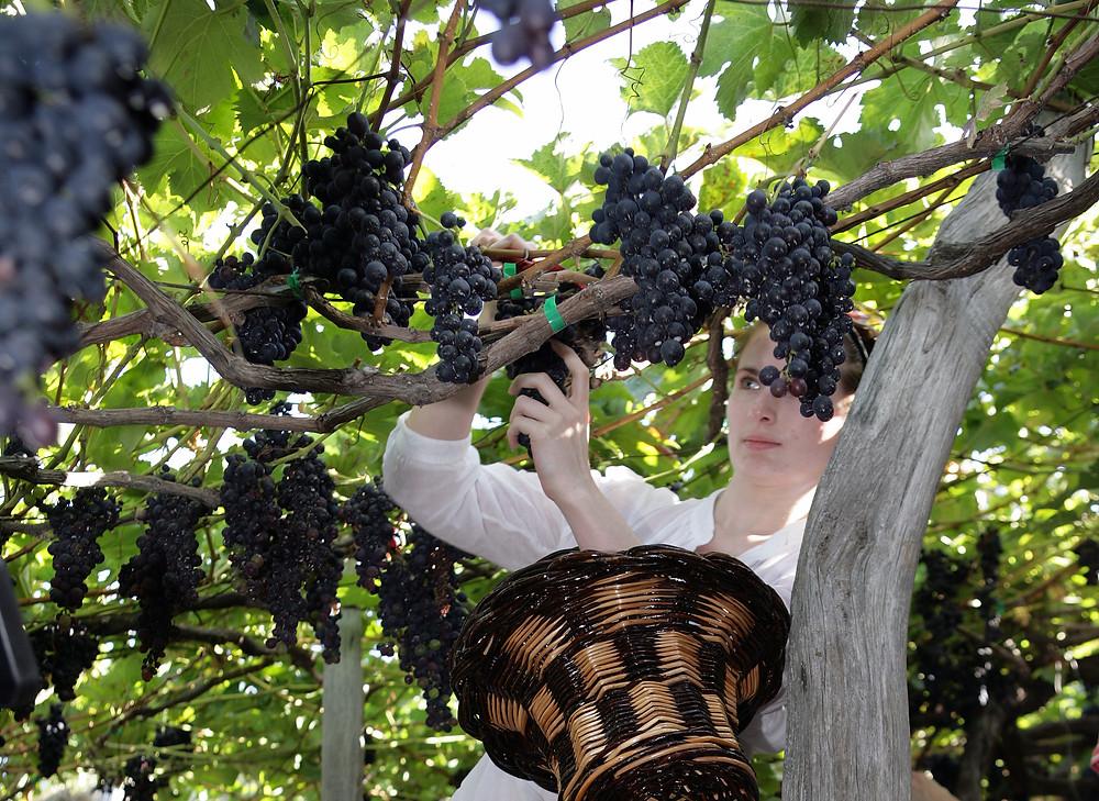 wijnregios-van-portugal-madeira