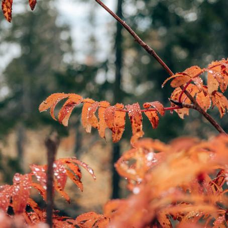De mooiste national parken van Finland