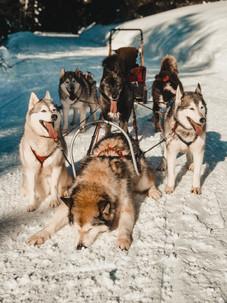 hondensledetocht-europa