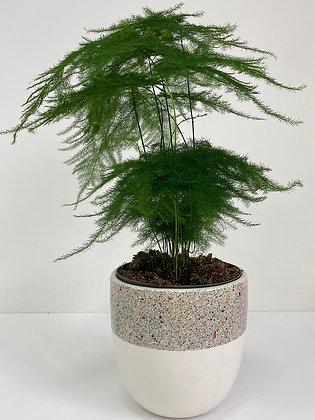 Plant Pot 01
