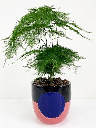 Plant Pot 05