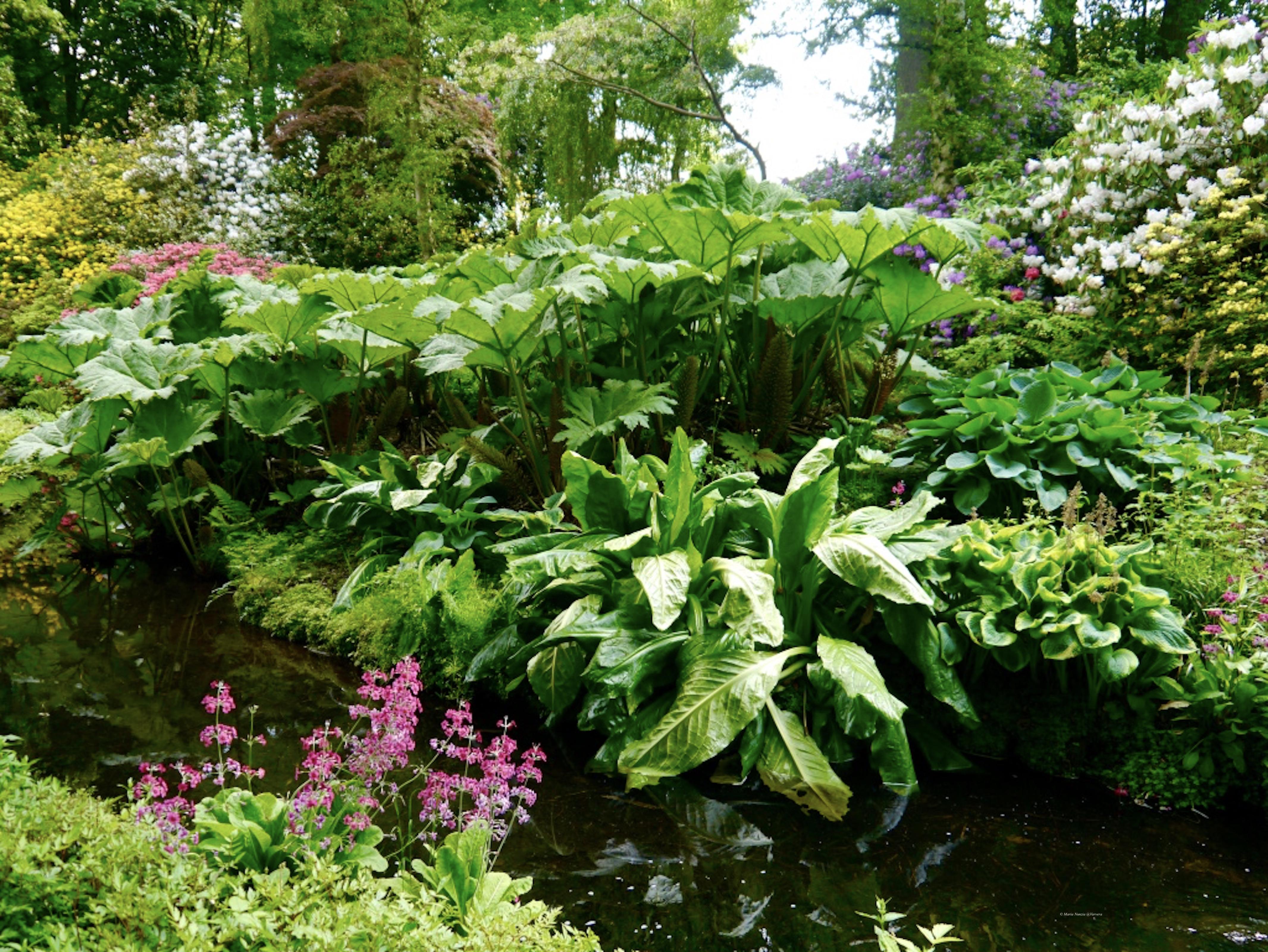 _Hodnet_Hall_Gardens_©_Maria_Nunzia__Varvera_P1460891_1024