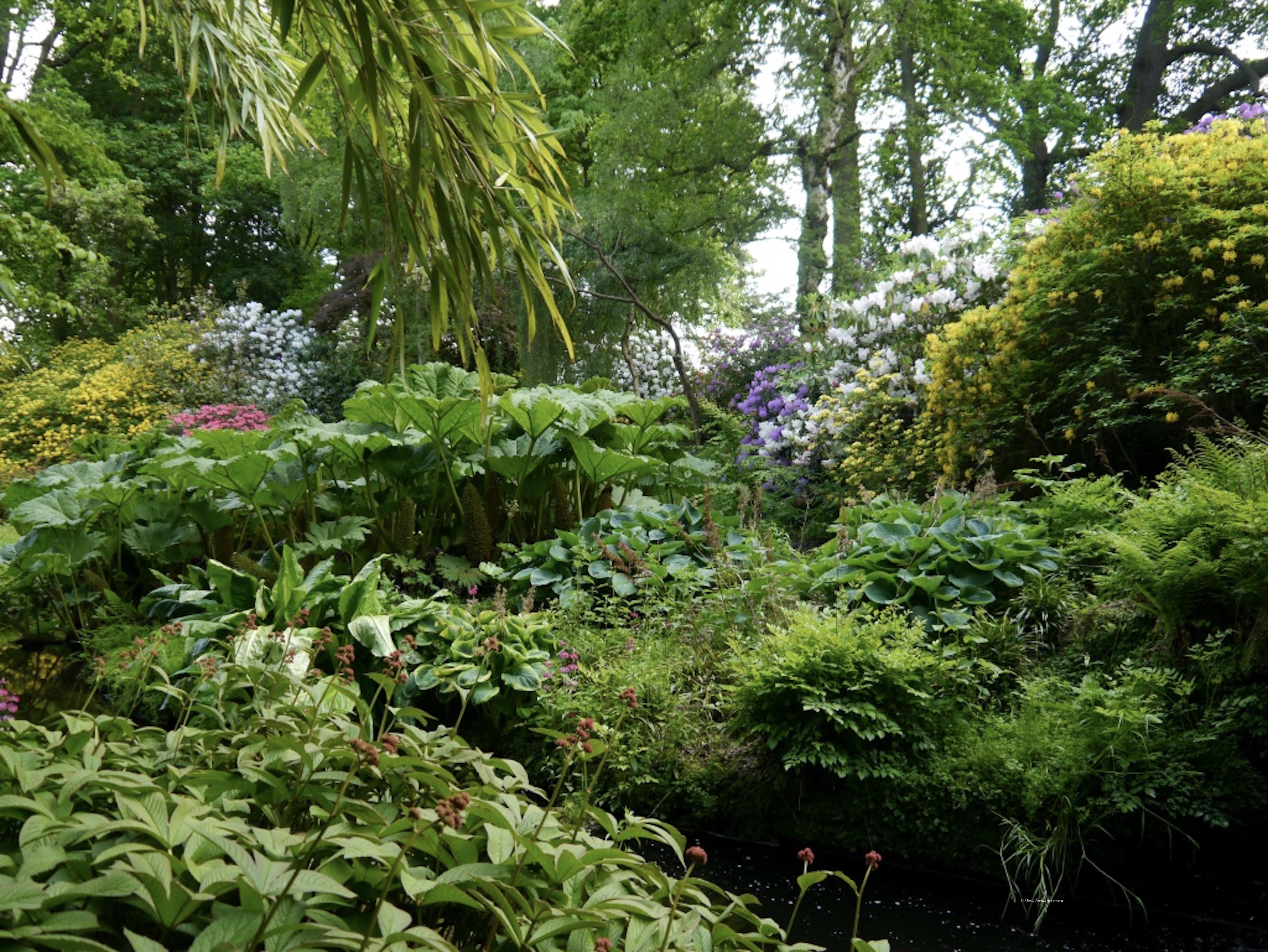 Hodnet_Hall_Gardens_©Maria_Nunzia__Varvera_P1460943_1024