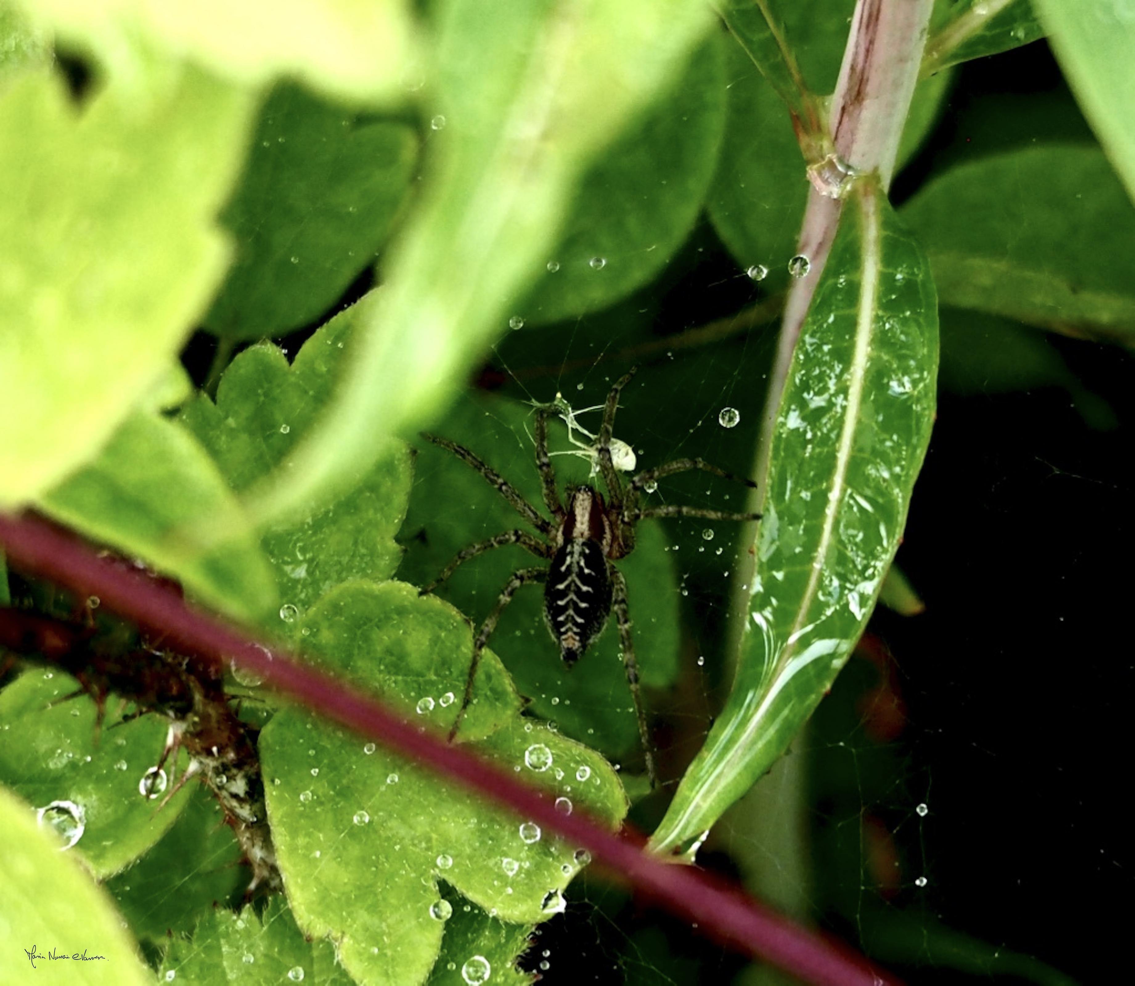 Spider_in_Weg_Lodge_Hill_P1010102_1024.jpg_©_Maria_Nunzia__Varvera_