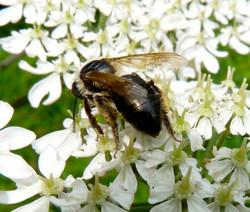 Bee_3_©_Maria_Nunzia__Varvera_