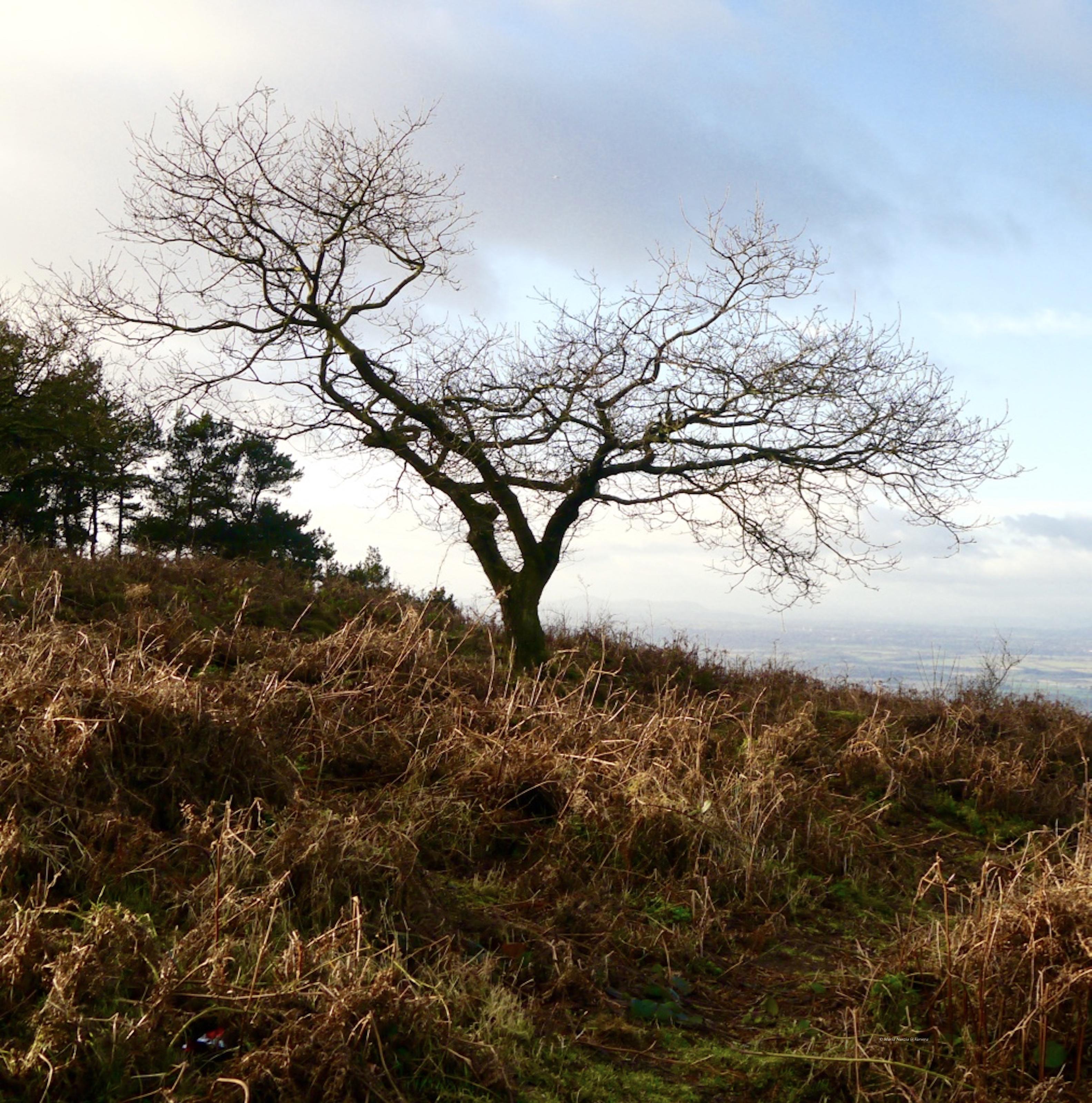 Wrekin forest by Maria Nunzia _Varvera