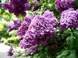 Hodnet_Hall_Gardens_©Maria_Nunzia__Varvera_P1460925_1024
