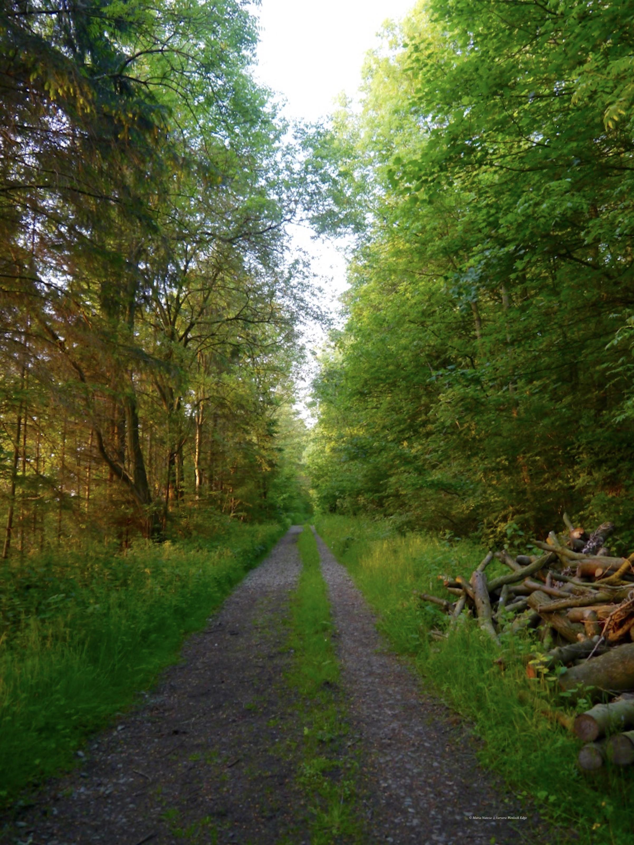 Trees_3_Wenlock_Edge_©_Maria_Nunzia__Varvera_