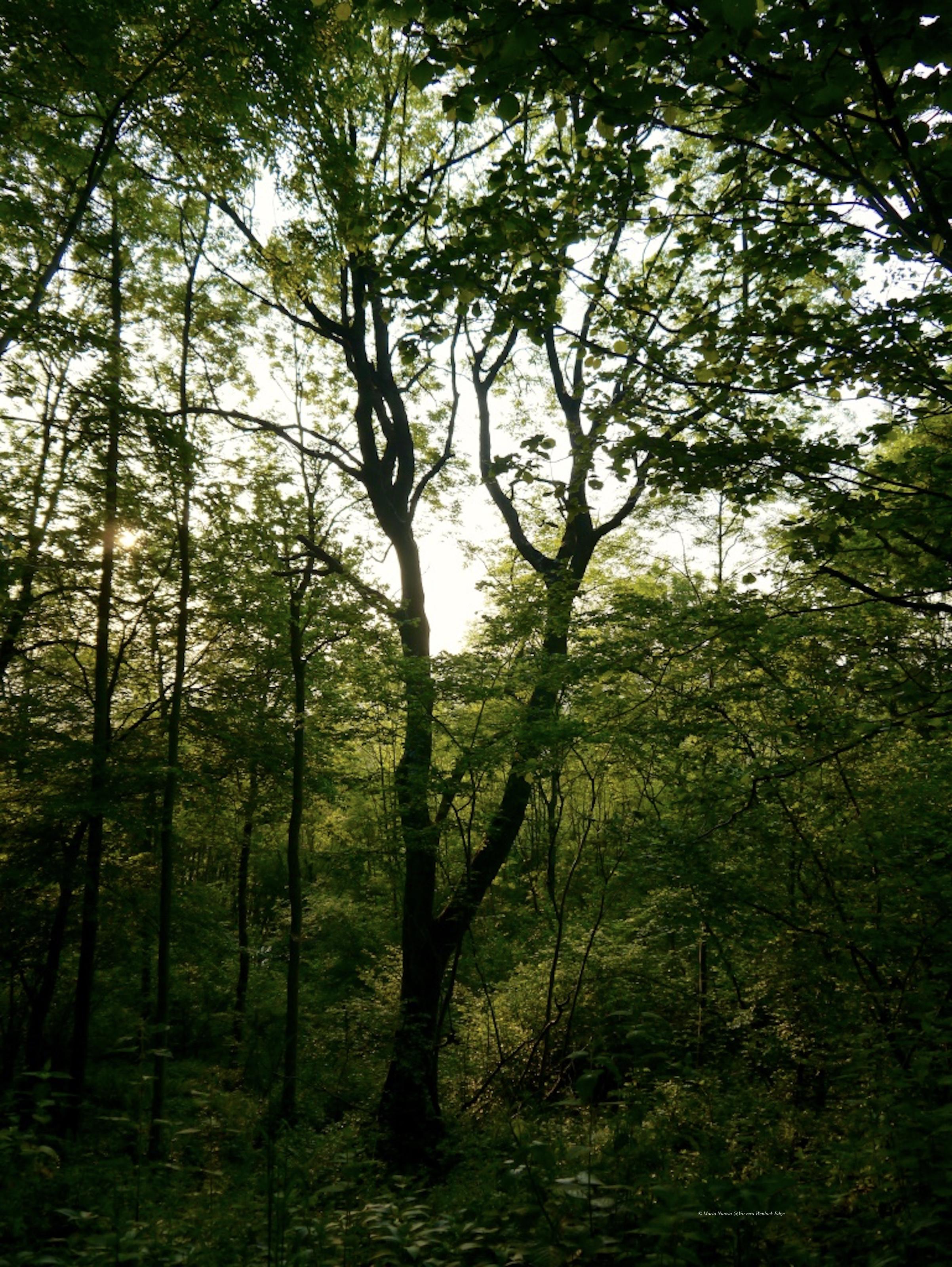 Trees_on_Wenlock_Edge_©Maria_Nunzia__Varvera_