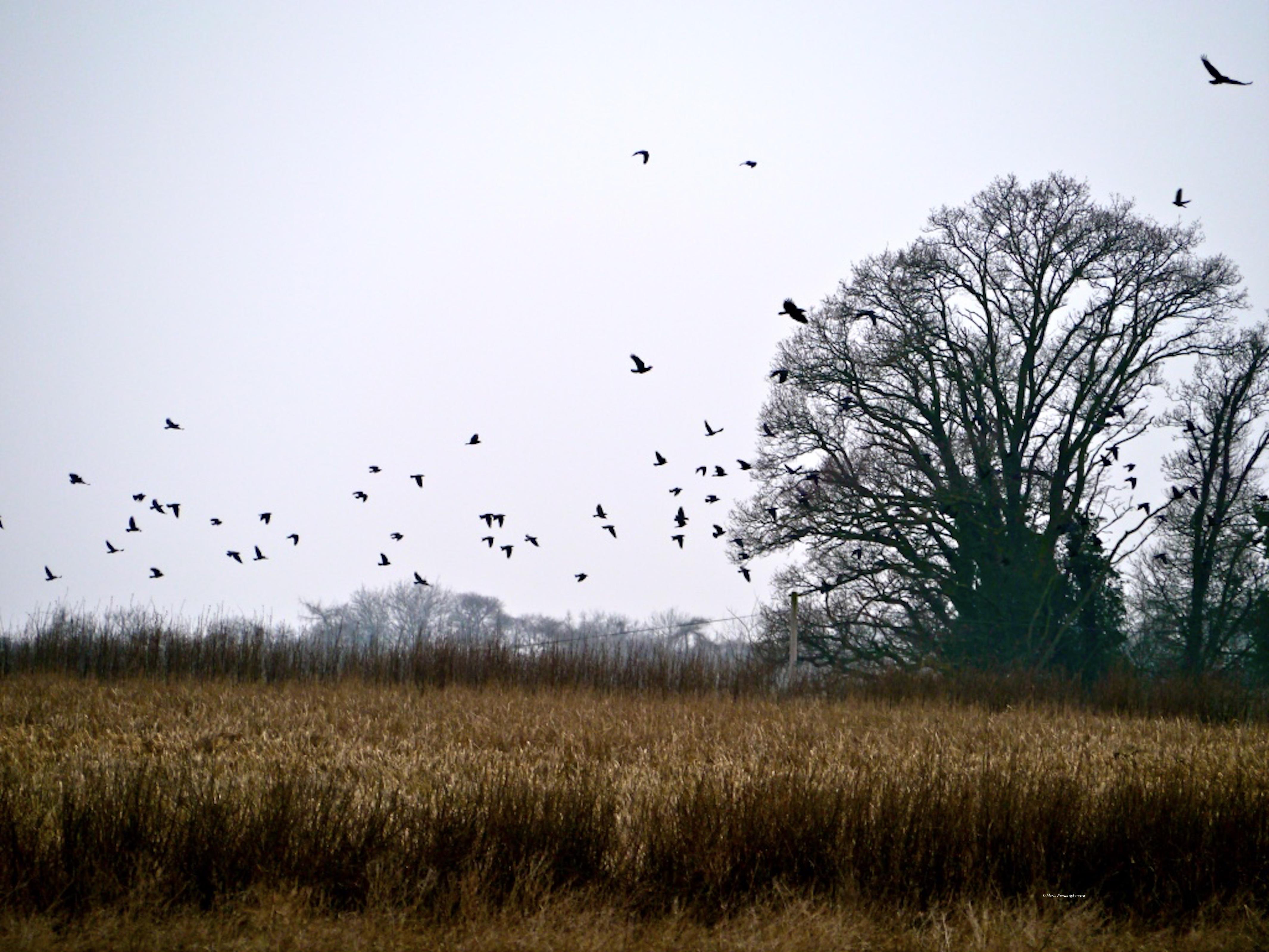 Birds in field