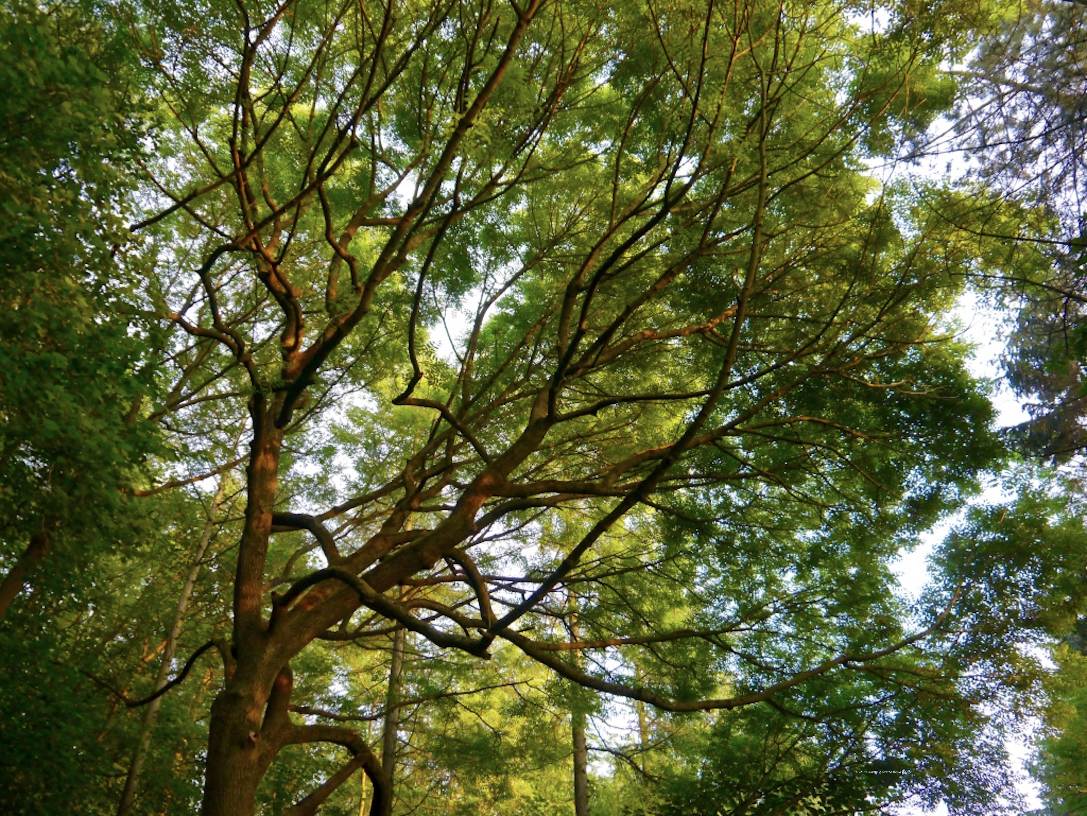 trees_Wenlock_Edge_©_Maria_Nunzia__Varvera_