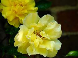 Garden_flowers_2_©_Maria_Nunzia__Varvera_