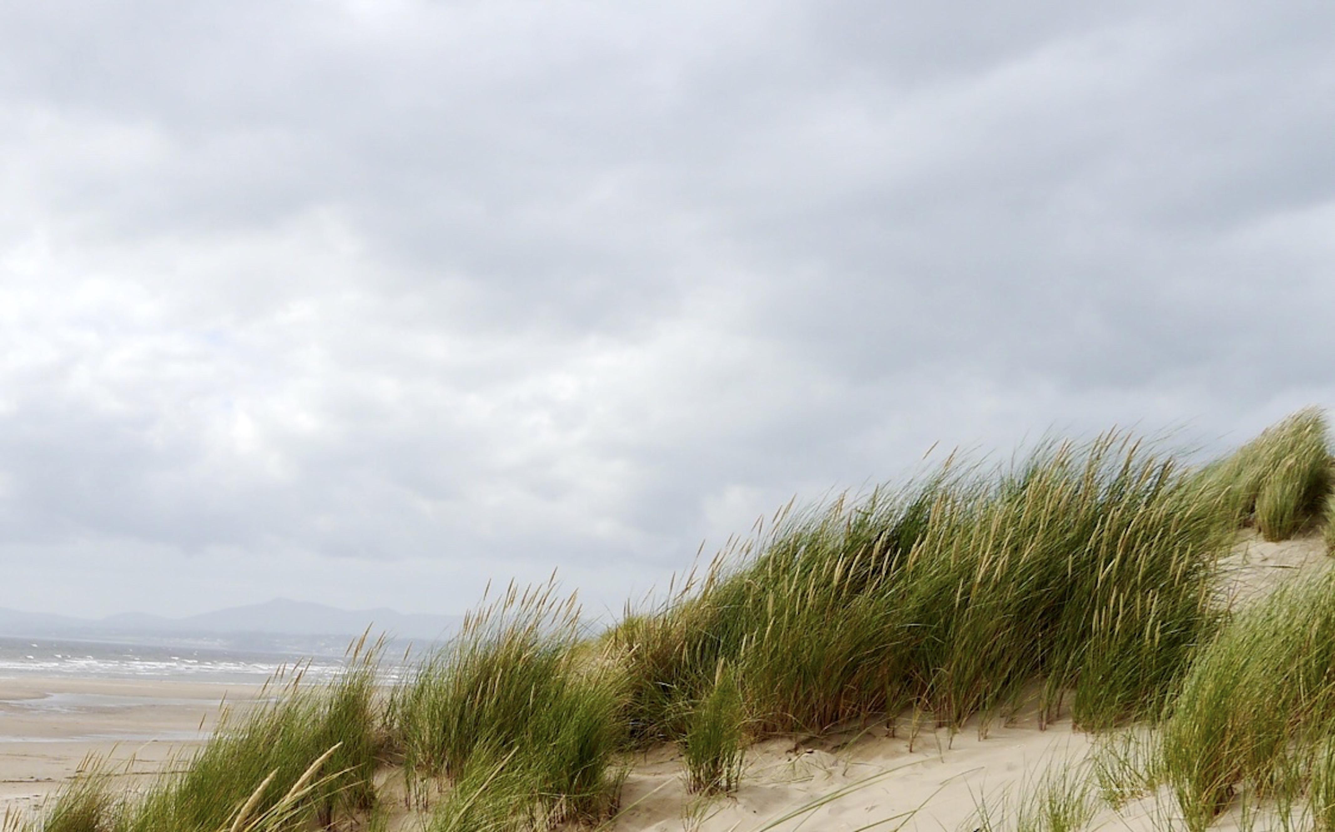 Morfa_Beach_©_Maria_Nunzia__Varvera_P1510948_1024_1024