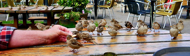 Cormarants on Lackford Lakes by Maria Nunzia @Varvera