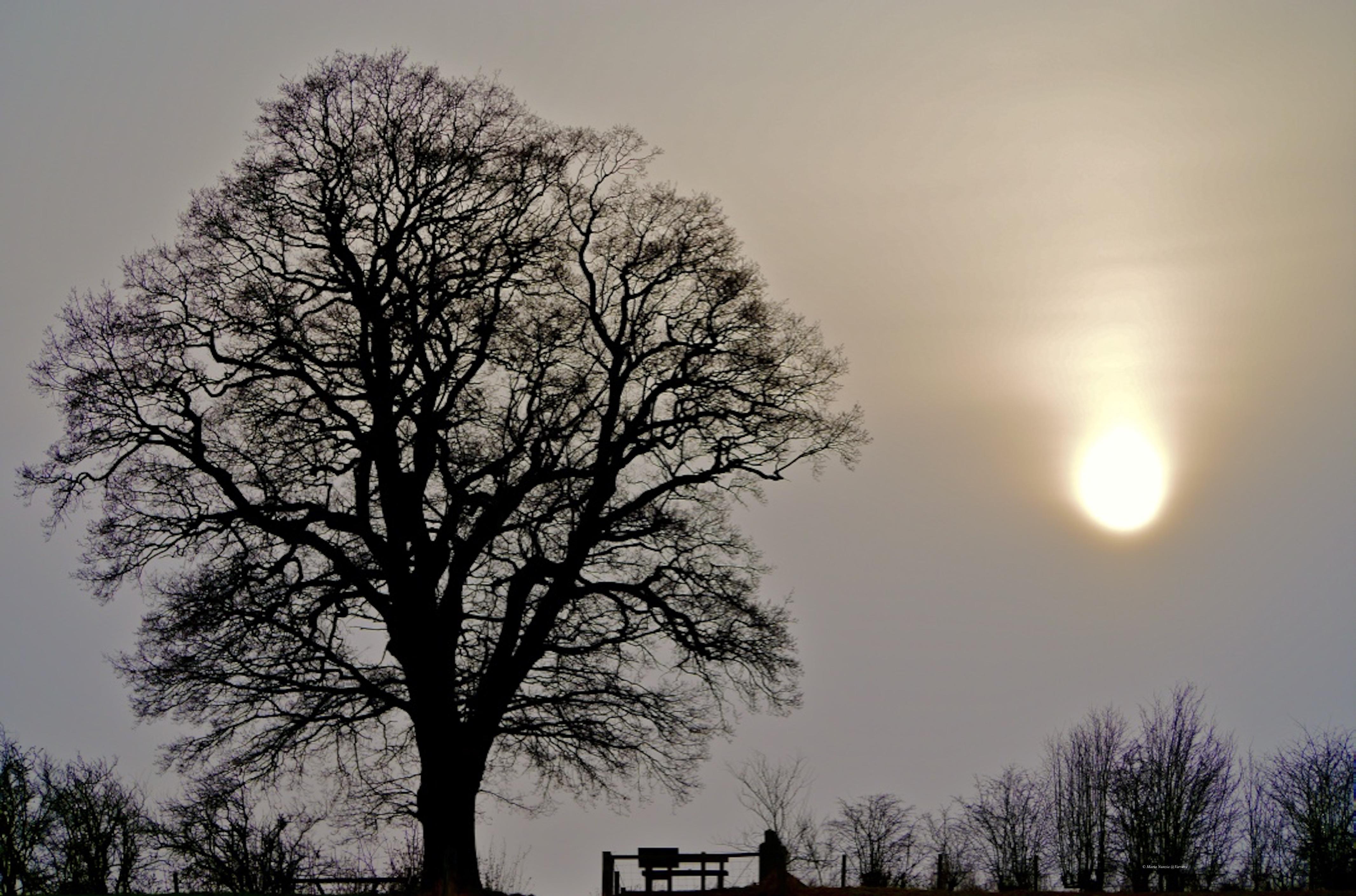 Tree at Venus pool by Maria Nunzia _Varvera
