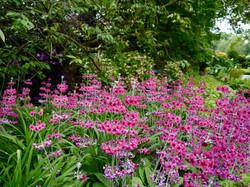 Hodnet_Hall_Gardens_©_Maria_Nunzia__Varvera_P1460877_1024