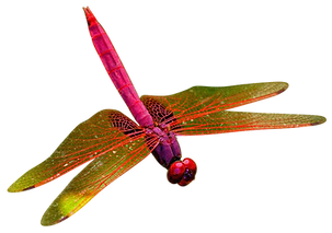 pink_dragonfly.png