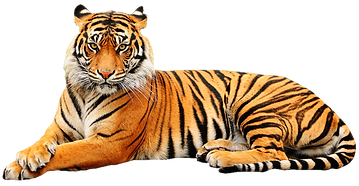 seated-tiger_edited.png