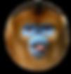 monkey-2_round_edited.png