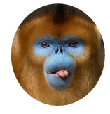 monkey-2_round_edited.png