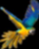 Parrot_blue.png