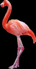 flamingo-2.png
