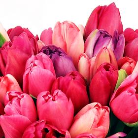Any Day Tulips