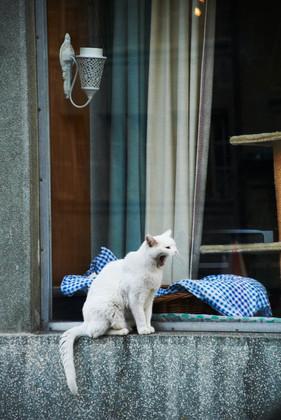 Le chat de Rivaz