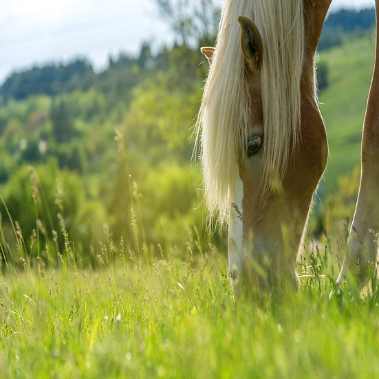 Equi-Graze Pasture Grass Seed 14kg Acre Pack