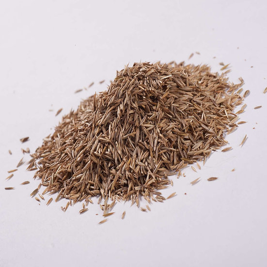 John Chambers Grass Seed landscaping without Rye