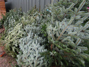 Christmas Trees (2).JPG