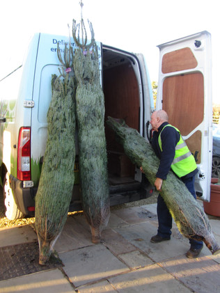Christmas Tree Delivery (3).JPG