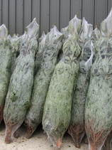 Christmas Trees (6).JPG