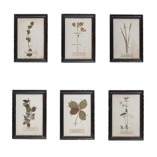Fir Framed Wall Art w/ Vintage Floral Image, 6 Styles