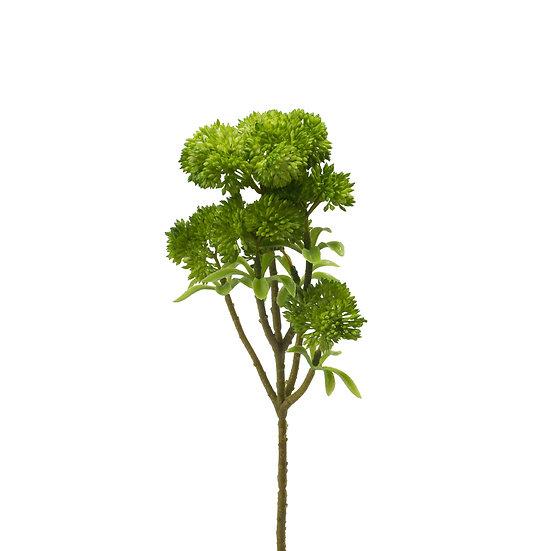 Stonecrop,6 Flowers, Green