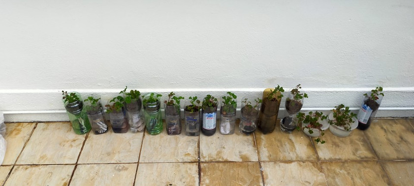 Repurposed soda bottles