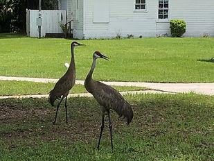 Church birds.JPG