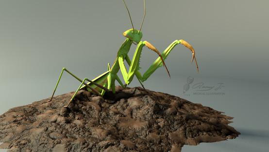 3D model of praying mantis
