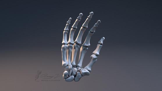 3D hand bones
