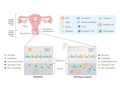 Vaginal microbiome