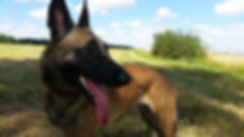 Arwen, mascotte de la pension chien en Loir et Cher