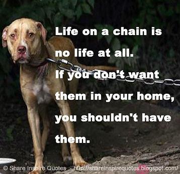 dog chain.jpg