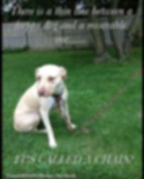 dog chain 3.jpg