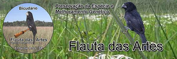 Bicudário Flauta das Artes - Bicudos de Alta Genética Criadouro em SP