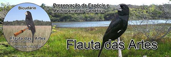 Bicudário Flauta das Artes - Bicudos de Alta Linhagem Criadouro em SP